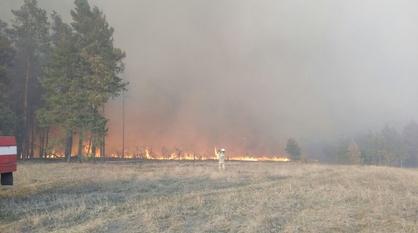 Два пожара за 3 суток произошло в заповеднике в Воронежской области