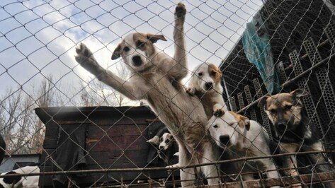 Фонд актрисы Брижит Бардо предложил помощь воронежскому приюту для собак