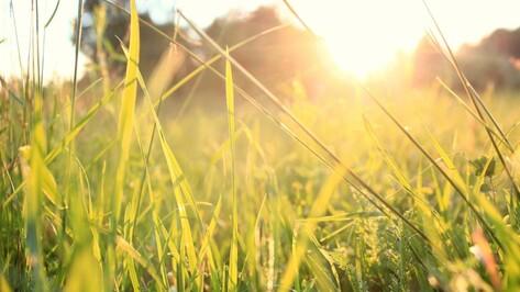 В последние выходные лета в Воронеже будет тепло и сухо