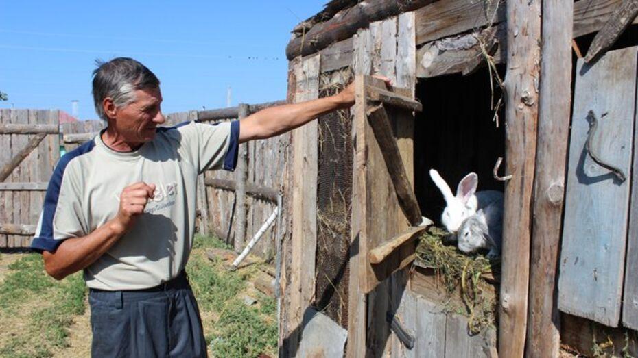 От нападения неизвестного животного пострадали подворья еще одного терновского села