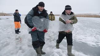Репортаж РИА «Воронеж». Как возле купели в канун Крещения вырос ледяной город