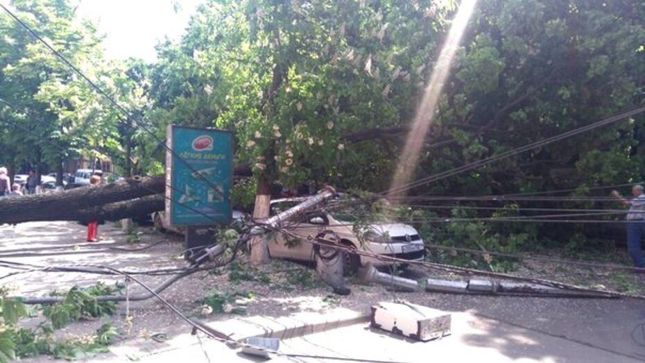 Рухнувшие в центре Воронежа дерево и столб повредили 7 машин
