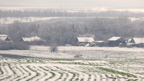 Пережить зиму. Как малоснежная погода в Воронежской области скажется на полях и садах