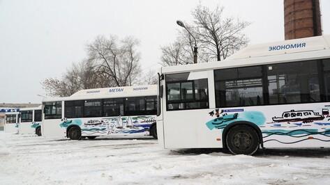 На «народные маршруты» в Воронеже вышли 10 разукрашенных автобусов