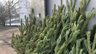 Воронежцам рассказали об утилизации новогодних елок