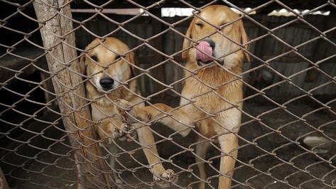 При мэрии Воронежа создали совет по вопросам обращения с бездомными животными