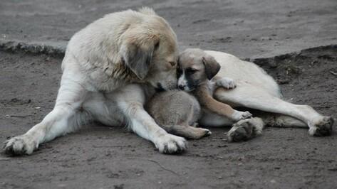 В Воронеже пройдут публичные слушания по проекту строительства приюта для животных