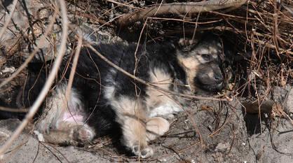 Воронежцы смогут сообщить о бездомном животном напрямую сотруднику мэрии