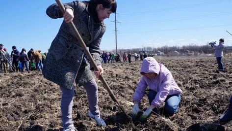 Верхнемамонцы высадили 1,5 тыс ясеней в рамках акции «Лес Победы»