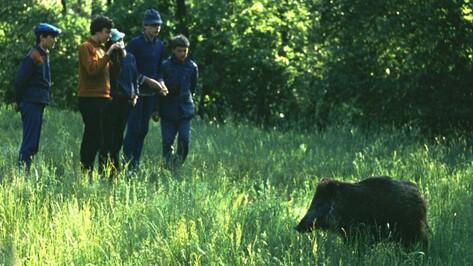 В воронежском заповеднике зафиксировали два случая африканской чумы свиней