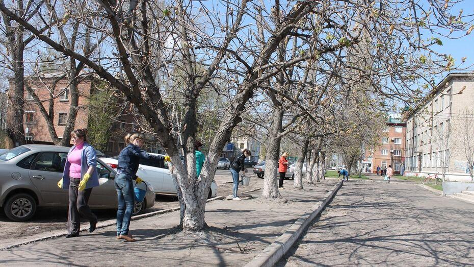 Борисоглебские чиновники побелили деревья и бордюры