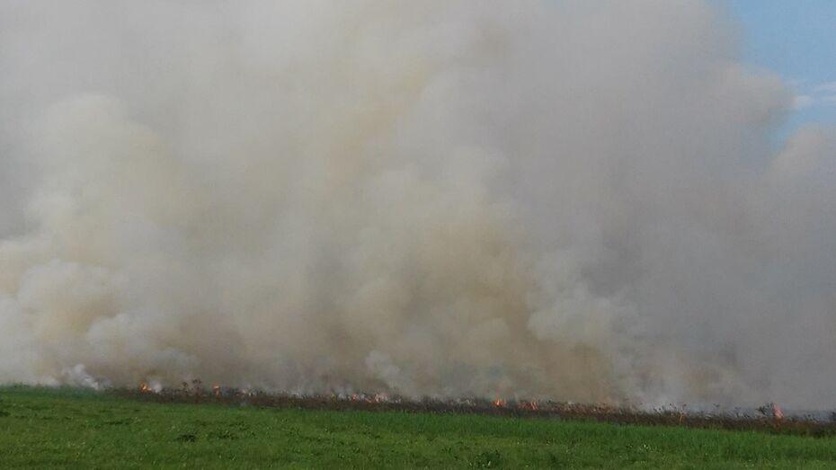 В Острогожском районе сгорело 500 кв. м камыша