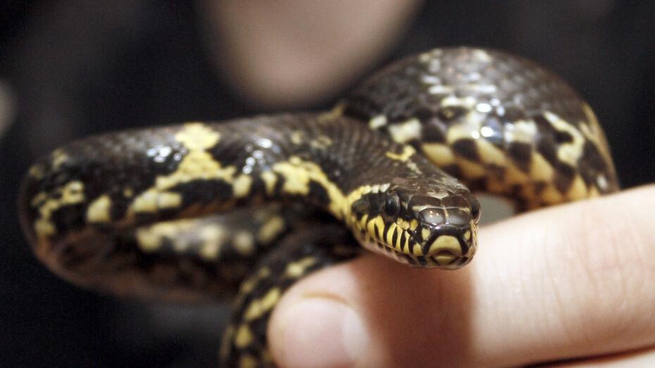 Жительница Воронежа нашла змею в душевой кабине