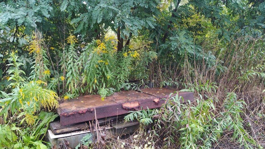 Дачники захламили берег реки Тавровка в Воронеже
