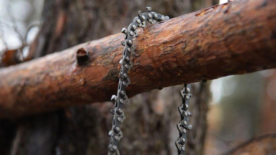 Парк «Дельфин» в Воронеже лишится 116 деревьев