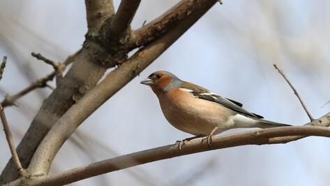 Воронежский заповедник опубликовал фотографии первых прилетевших птиц