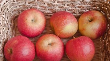 Россельхознадзор нашел на воронежском рынке 4 т запрещенных яблок