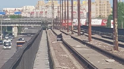 Неизвестный разбирал рельсы на Северном мосту Воронежа