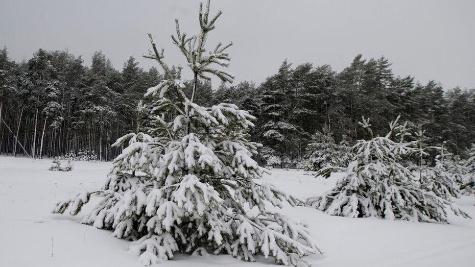 «Новогоднюю» охрану усилили в воронежских лесах