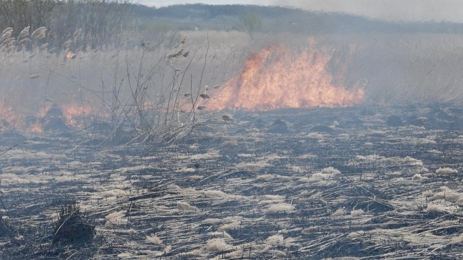 В Воронежской области стартовала акция против сжигания сухой травы