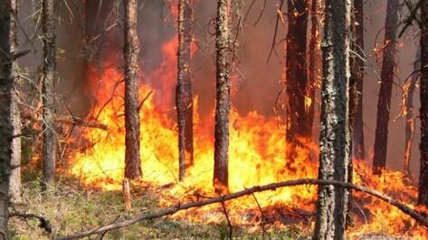В Верхнемамонском районе потушен лесной пожар