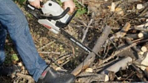 Под Воронежем злоумышленники вырубили дубы, сосны и березы почти на 2 млн рублей