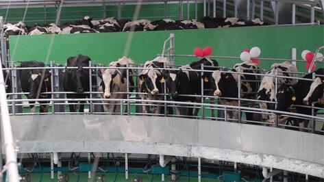 В Россошанском районе открыли крупнейший в регионе молочный комплекс