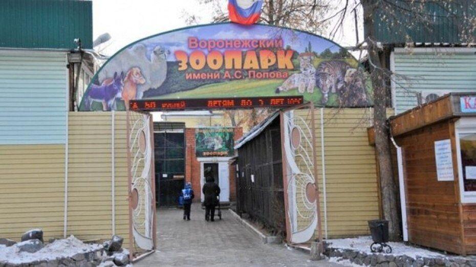 В воронежском зоопарке подростки сыграют в антирасистский квест