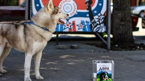 В Воронеже танцующие собаки собрали для бездомных собратьев 17 тысяч рублей
