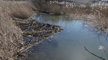 Из реки Тавровка в Воронеже при расчистке достали строительный хлам