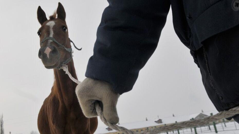 Сторож кантемировской фермы помешал злоумышленникам украсть лошадей