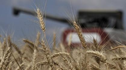 Воронежская область субсидирует аграриев еще на 65 млн рублей по поручению губернатора