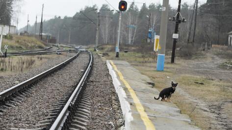 Проезд в электричках в Воронежской области подорожает 31 декабря
