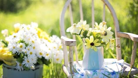 Жителей Воронежской области пригласили на фестиваль цветов