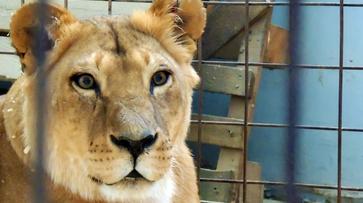 В Воронеже зоозащитники присоединятся к акции «За цирк без животных»