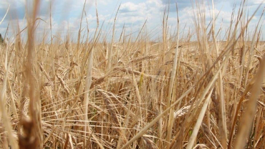 Воронежская область нарастит экспорт продукции АПК в 2,5 раза