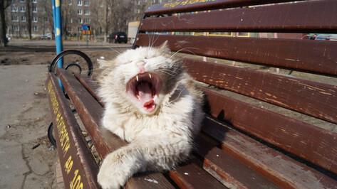 Погода в Воронеже побила температурный рекорд 8 марта