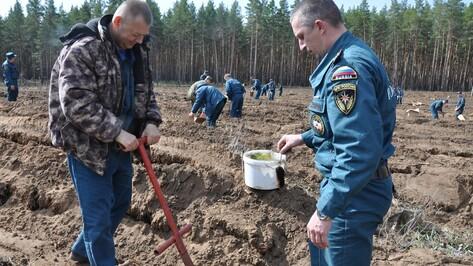 Павловские пожарные посадили новый лес