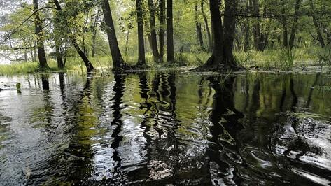 Экологи начнут работу над проектом расчистки русла реки Воронеж в 2018 году