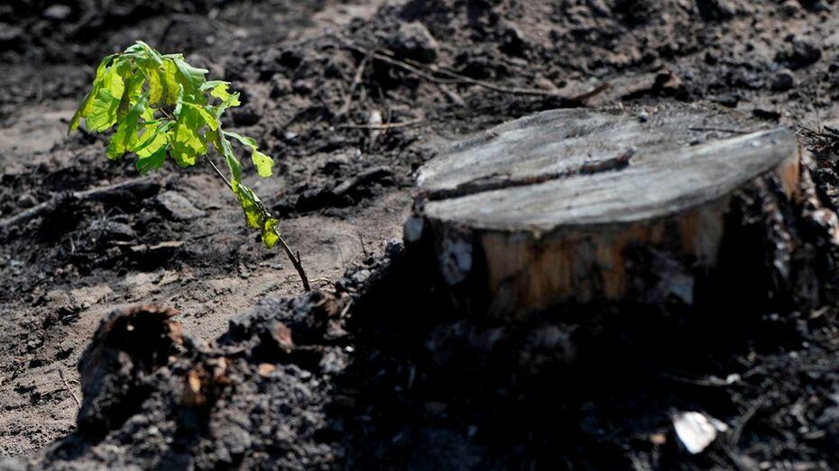 Экологи обязали «Воронежнедра» посадить деревья в песчаном карьере