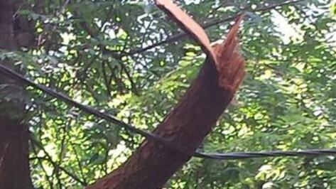 В Воронеже сломанное дерево повисло на проводах на улице 25 Октября