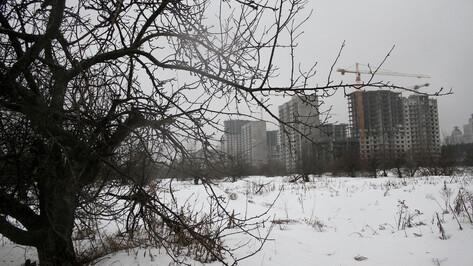«Дровяной склад» или природа в городе? Как воронежцы решали судьбу участка яблоневого сада