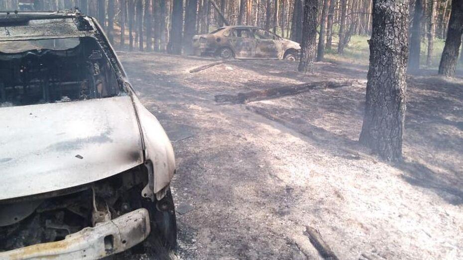 Из-за загоревшейся машины в Воронежской области произошел лесной пожар