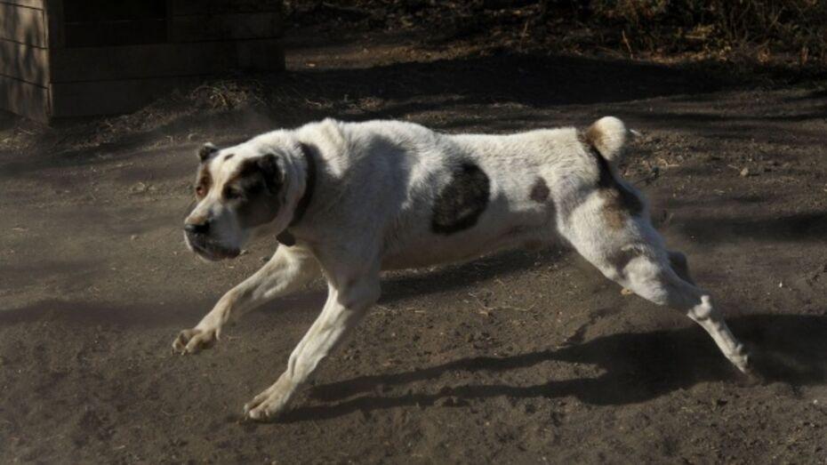 Воронежский «ЛИСКО-Бройлер» оштрафовали за бездомных собак на площадке по утилизации