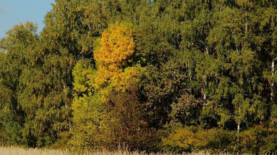 Возле Воронежа заложат лесной массив в память о погибших в Великой Отечественной войне