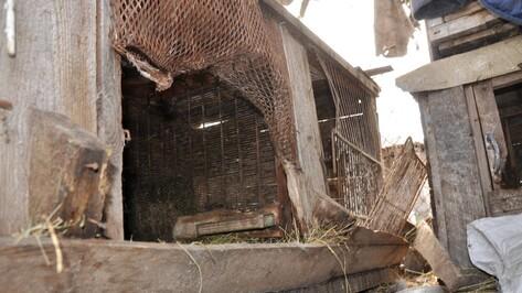 В Павловске «чупакабра» уничтожила нескольких кроликов