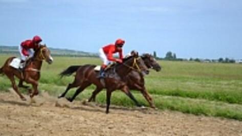 В Павловске прошел конно-спортивный праздник