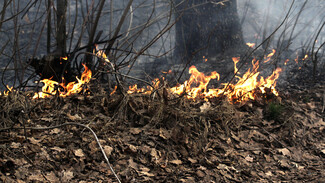 На окраине Воронежа загорелась сухая трава