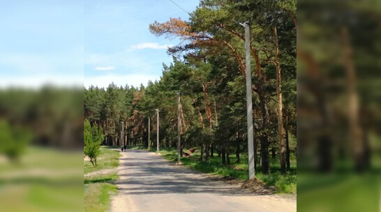 Уличное освещение вдоль лесной дороги в районе детских лагерей появилось в Павловске