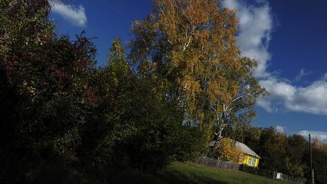 Самым красивым селом Воронежской области объявили Нелжу Рамонского района